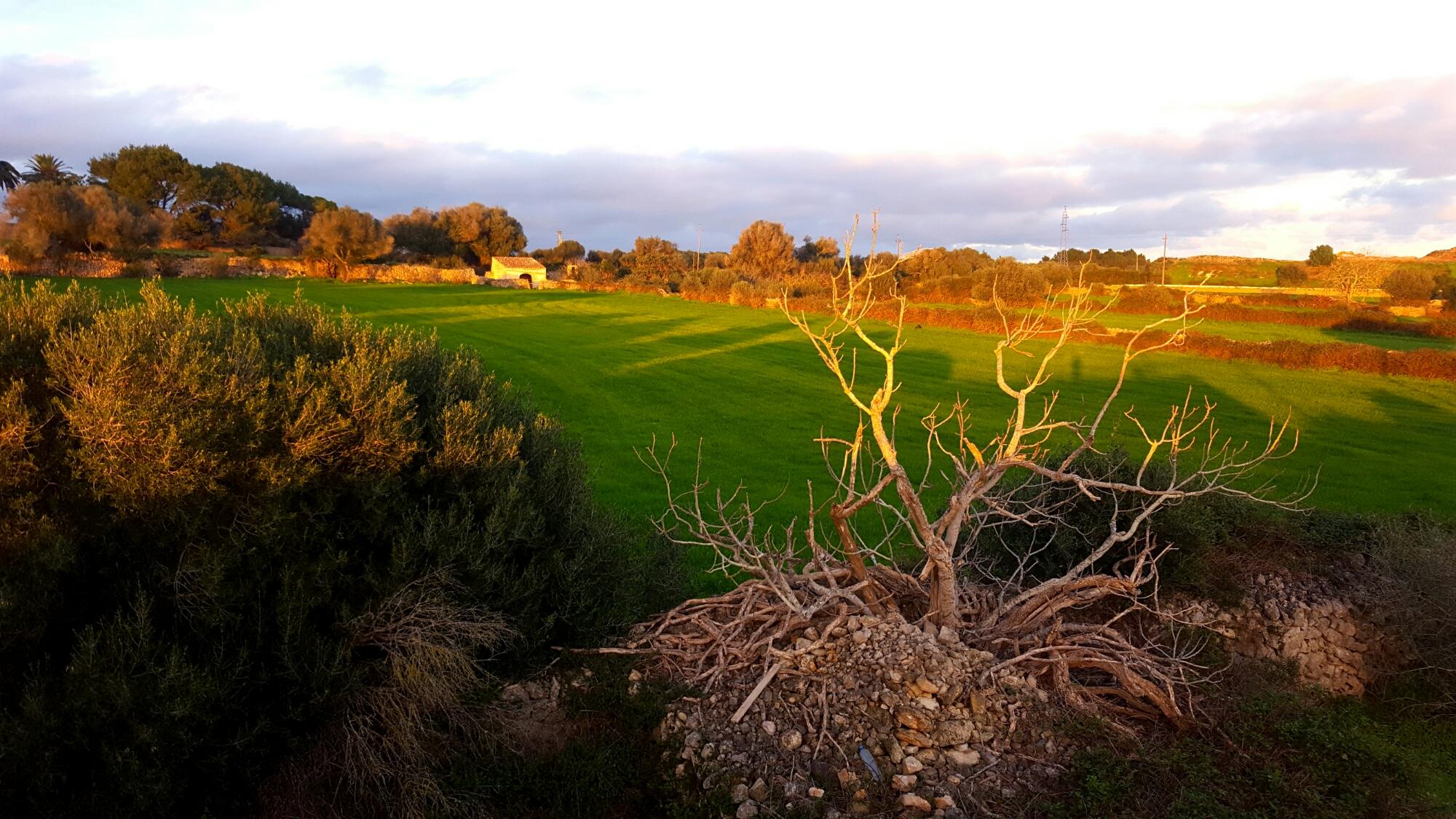 Vista campo menorca mao alaior